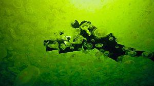 Life: Criaturas de las profundidades