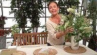 Los consejos de Maxi - Relájate con las flores del sauco
