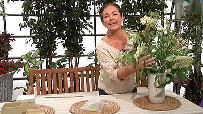 Los consejos de Maxi - Rel�jate con las flores del sauco