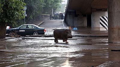 Las inundaciones en Georgia han roto las puertas de zoo y decenas de animales merodean por sus calles