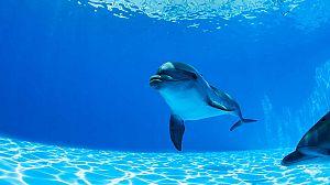 Delfines en tierra (1)