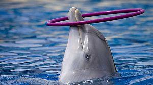 Delfines en tierra (2)