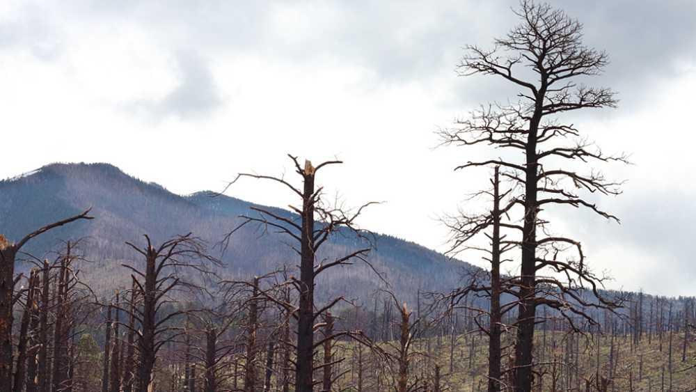 La Ma�ana - Incendios forestales