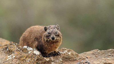 Grandes documentales - Iconos de la vida salvaje: los animales peque�os de �frica - Ver ahora