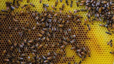 Andr�s, el salvador de las abejas
