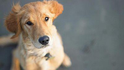 En España hay 20 millones de mascotas