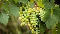 Los Consejos de Maxi - La uva protectora de la piel