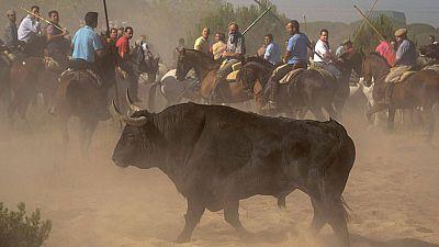 La Ma�ana -  Pol�mica fiesta del Toro de la Vega