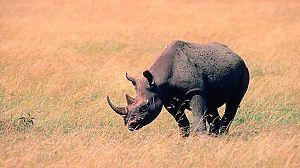 El vuelo del Rinoceronte