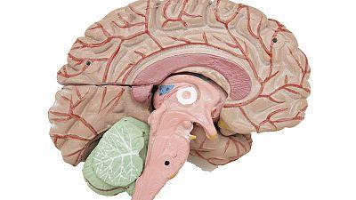 Saber vivir - Cuidados del cerebro