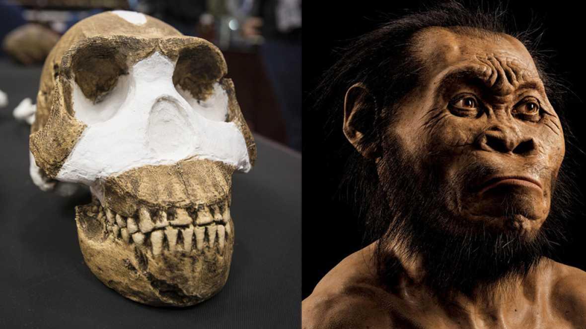 El Homo Naledi, una nueva especie de homínido descubierto en Sudáfrica
