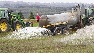 Ganaderos gallegos derraman 130.000 litros de leche en protesta por los bajos precios del sector