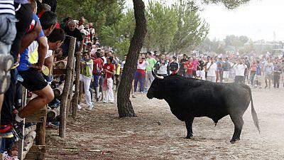Tordesillas celebra el Toro de la Vega rodeado de pol�mica y ante un importante despliegue de seguridad