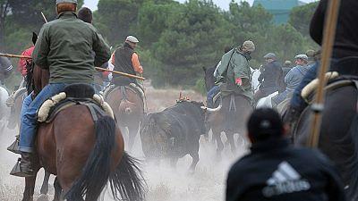 El Toro de la Vega de Tordesillas se celebra en medio de enfrentamientos entre defensores y detractores