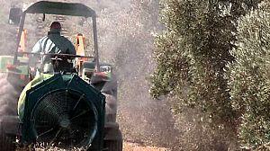 El Escarabajo Verde - Plagas de importación (2)