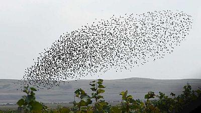 Los ecologistas asocian la pérdida de la biodiversidad de las aves a la expansión urbanística