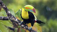 Grandes documentales - Caribe salvaje: la costa olvidada - ver ahora