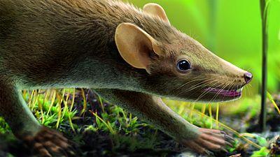 Hallado fósil que podría explicar el origen del pelo en los mamíferos