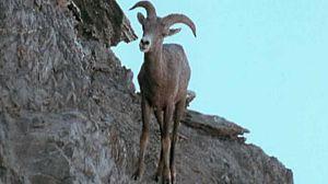 Gran fauna canadiense - Primera parte