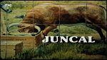 Cabecera de 'Juncal'