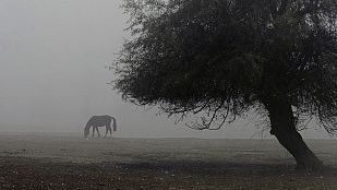 Viento fuerte en el Estrecho de Gibraltar y posibles nieblas en la meseta norte
