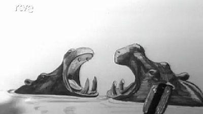Vida salvaje - Hay demasiados hipop�tamos