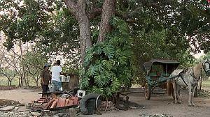 Araguaia, el fruto de la justicia