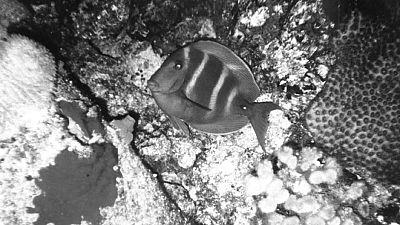 Vida salvaje - Peces tropicales