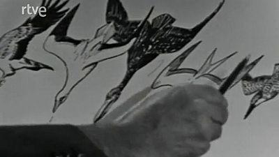 Vida salvaje - Las aves marinas