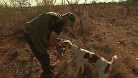 Jara y sedal - Descaste de conejo en Murcia - ver ahora