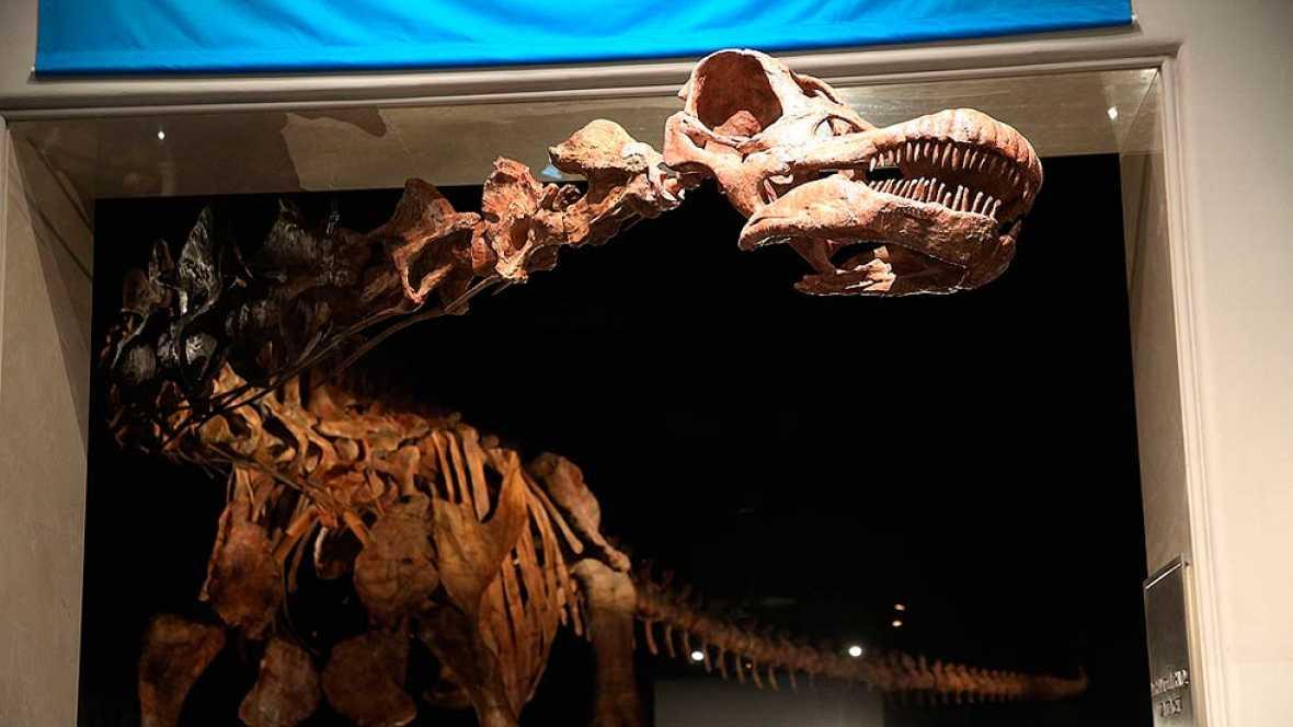 Nueva York muestra uno de los mayores dinosaurios jamás descubiertos
