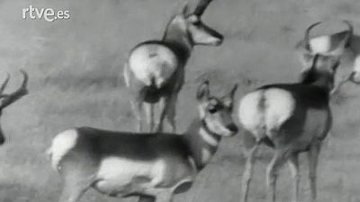 Vida salvaje - Jackson Hole