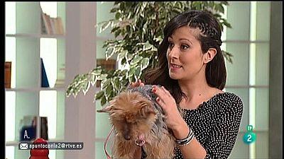 A punto con La 2 - Animales en casa: �Pueden padecer Alzheimer los perros?