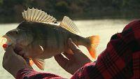 Jara y sedal - Pesca invierno en Mequinenza - ver ahora