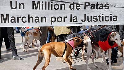 Numerosas ONG piden una ley estatal de protección animal para evitar casos como el de las tortugas de Atocha