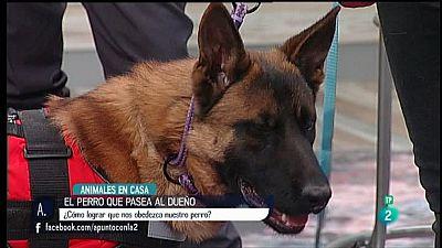 A punto con La 2 - Animales en casa - Ense�ar a que los perros obedezcan a la correa