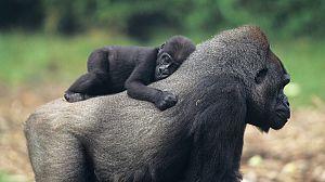 Mamás del reino animal: Bebés