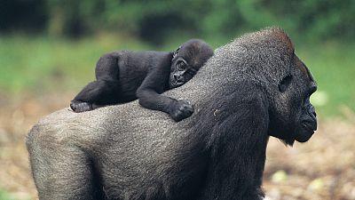 Grandes documentales - Mam�s del reino animal: Beb�s - Ver ahora