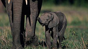 Mamás del reino animal: Primeros pasos