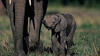 Grandes documentales - Mam�s del reino animal: Primeros pasos - Ver ahora