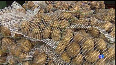 La patata d'enguany de sa Pobla, la més primerenca de la història.