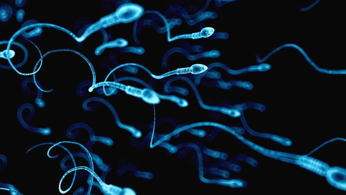 Científicos chinos consiguen por primera vez crear células de esperma de ratón en laboratorio
