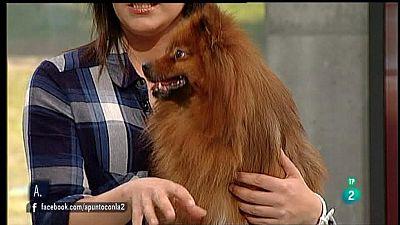 A punto con La 2 - Animales en casa - ¿Por qué un perro adulto orina en casa?