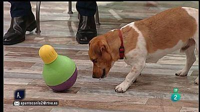 A punto con La 2 - Animales en casa - Mascotas mentalmente activas