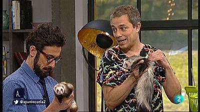 A punto con La 2 - Animales en casa - Los hurones