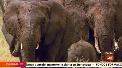 La Uni�on Europea presenta un plan de acci�n contra el tr�fico de especies salvajes, que amenaza la supervivencia de elefantes y rinocerontes, entre otros.