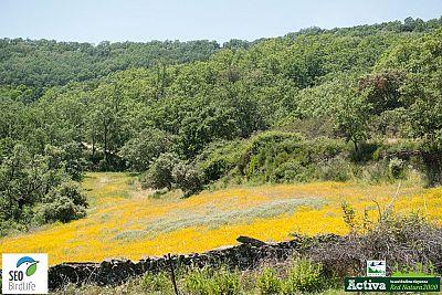 Red Natura 2000 - Sierras Cabezas del �guila