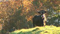 El escarabajo verde - A paso de vaca (1) - ver ahora