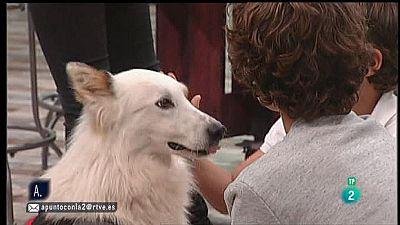 A punto con La 2 - Animales en casa - Niños pequeños con perros en casa