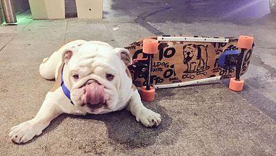 Otto, el perro patinador